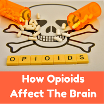 The Science Behind How Opioids Affect the Human Brain