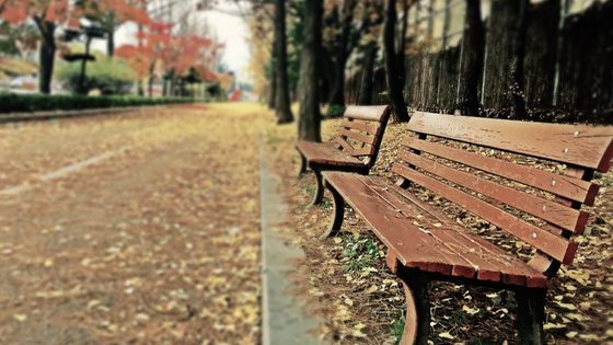 Empty street with benches in autumn